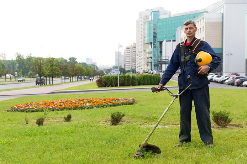 Advantages and Disadvantages of Landscaping in Office Spaces
