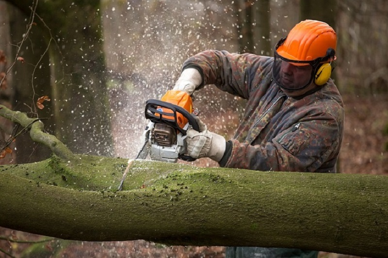 How to Choose the Best STIHL Chainsaw from a STIHL Dealer?