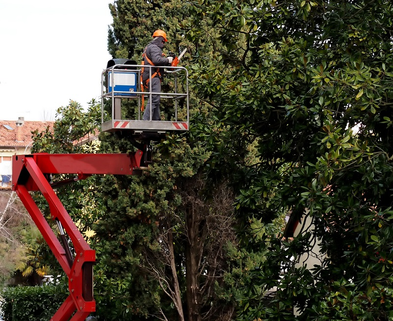 tree-pruning-service